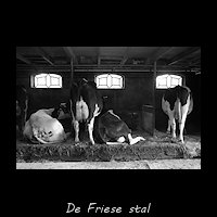Friese stal